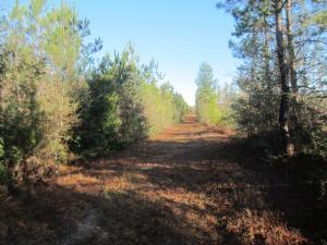 0 Highway 42 (75 +/- ac), Sumrall, MS 39482