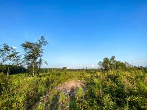 32.5 Acres Camp Dantzler Rd., Hattiesburg, MS 39401