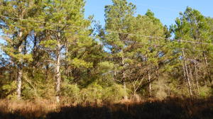 000 N Wind Ridge Ln, Purvis, MS 39475