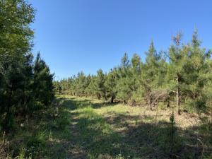 49 Acres MOL Sumrall Rd., Sumrall, MS 39482