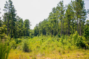0A Epley Rd., Sumrall, MS 39482