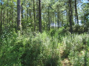 00 Rocky Branch Rd., Sumrall, MS 39482