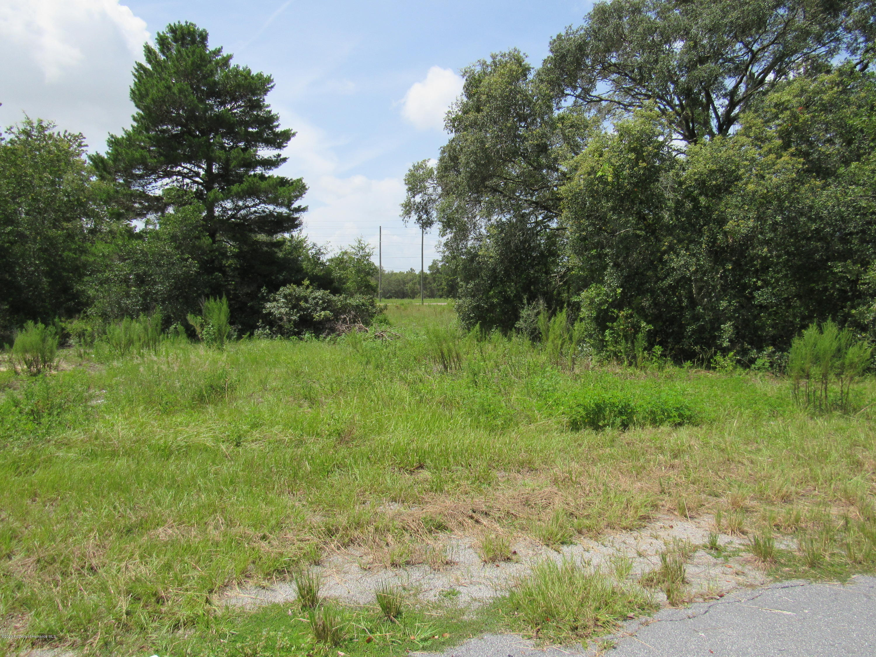 Listing photo id 3 for 000 Linden Drive