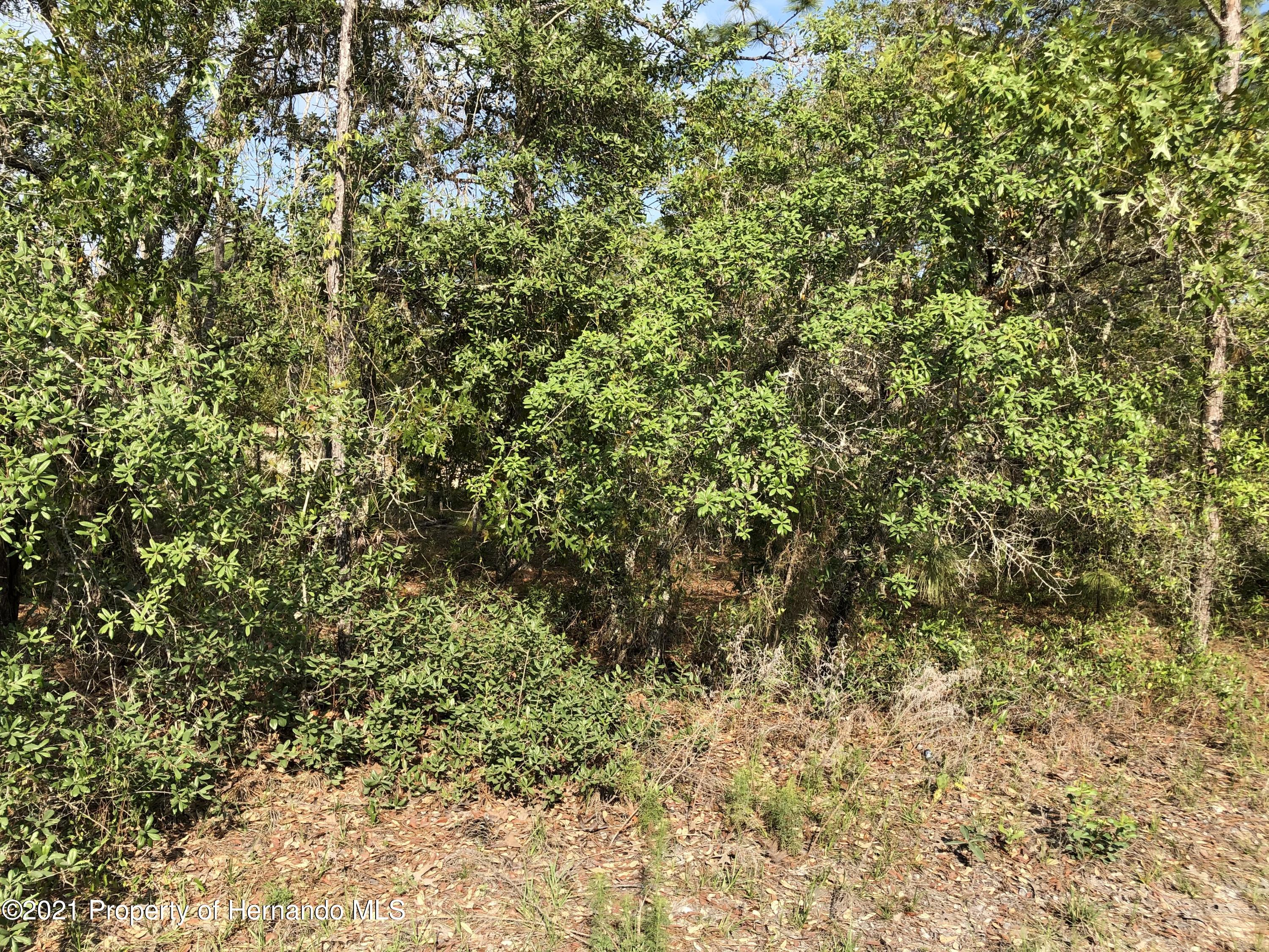 Listing photo id 2 for 0 Mottled Owl Road