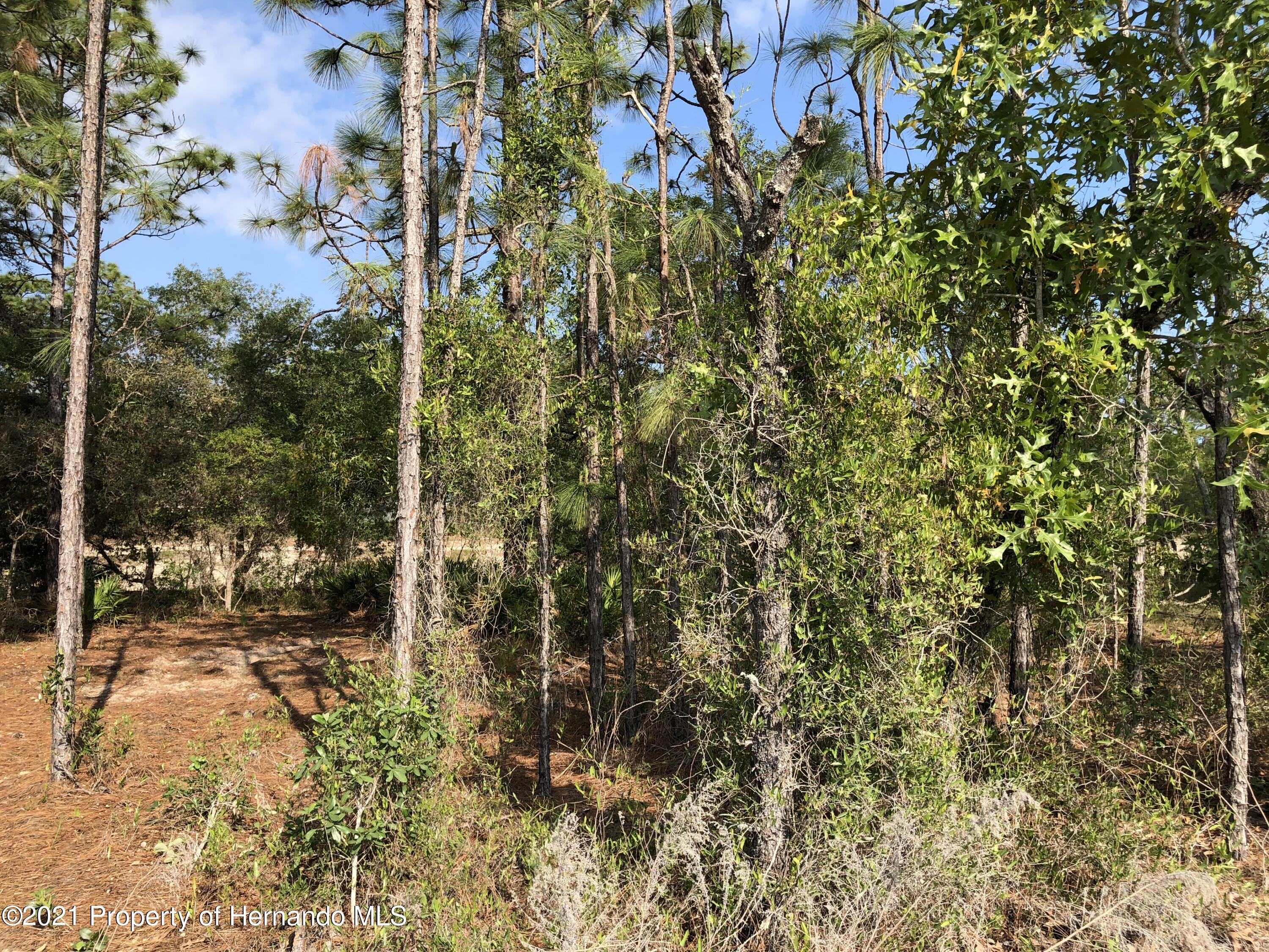 Listing photo id 2 for 00 Mottled Owl Road