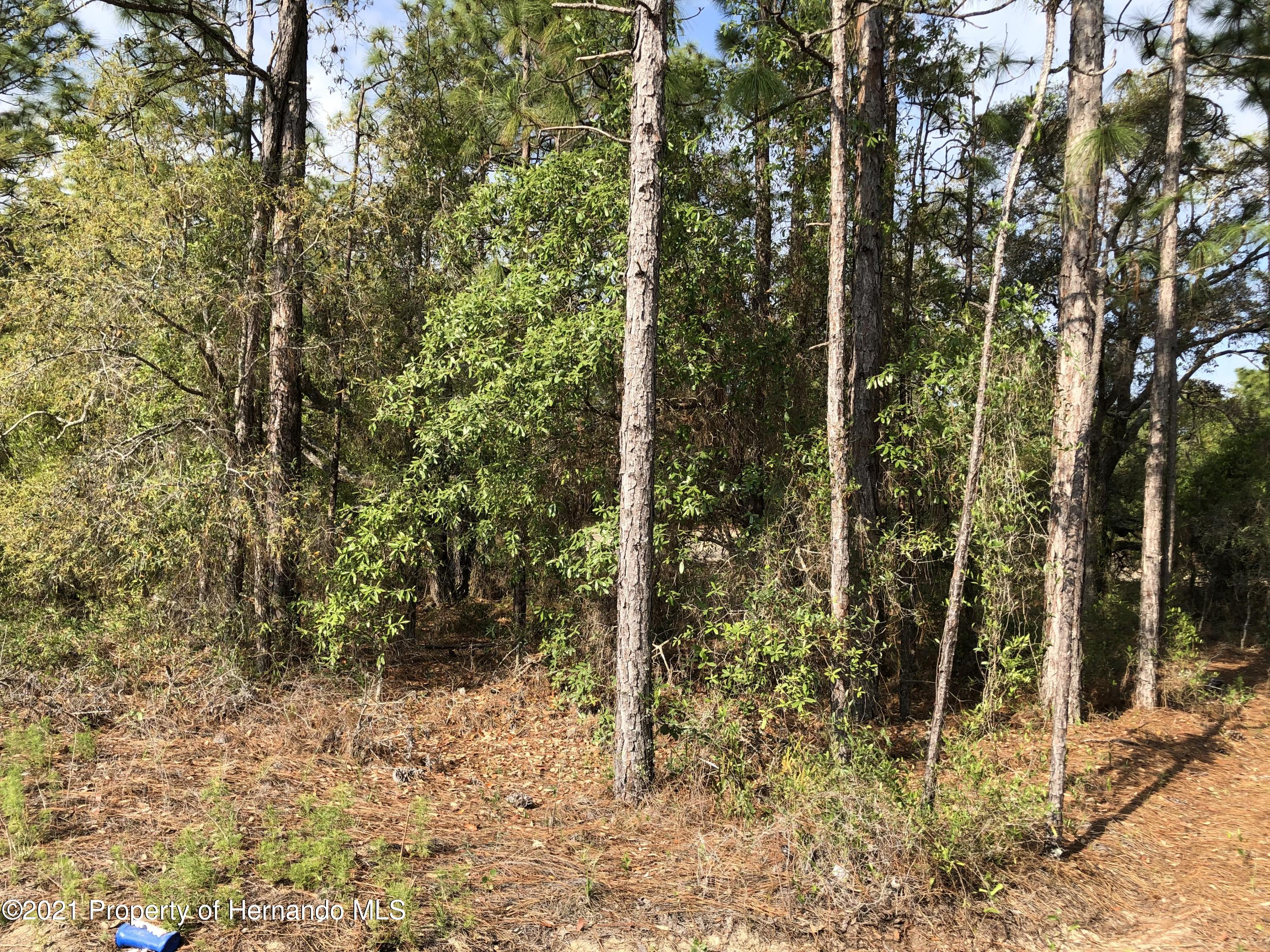 Listing photo id 3 for 00 Mottled Owl Road