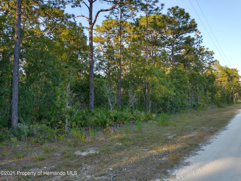 Listing photo id 4 for 0 Florida Wren Avenue