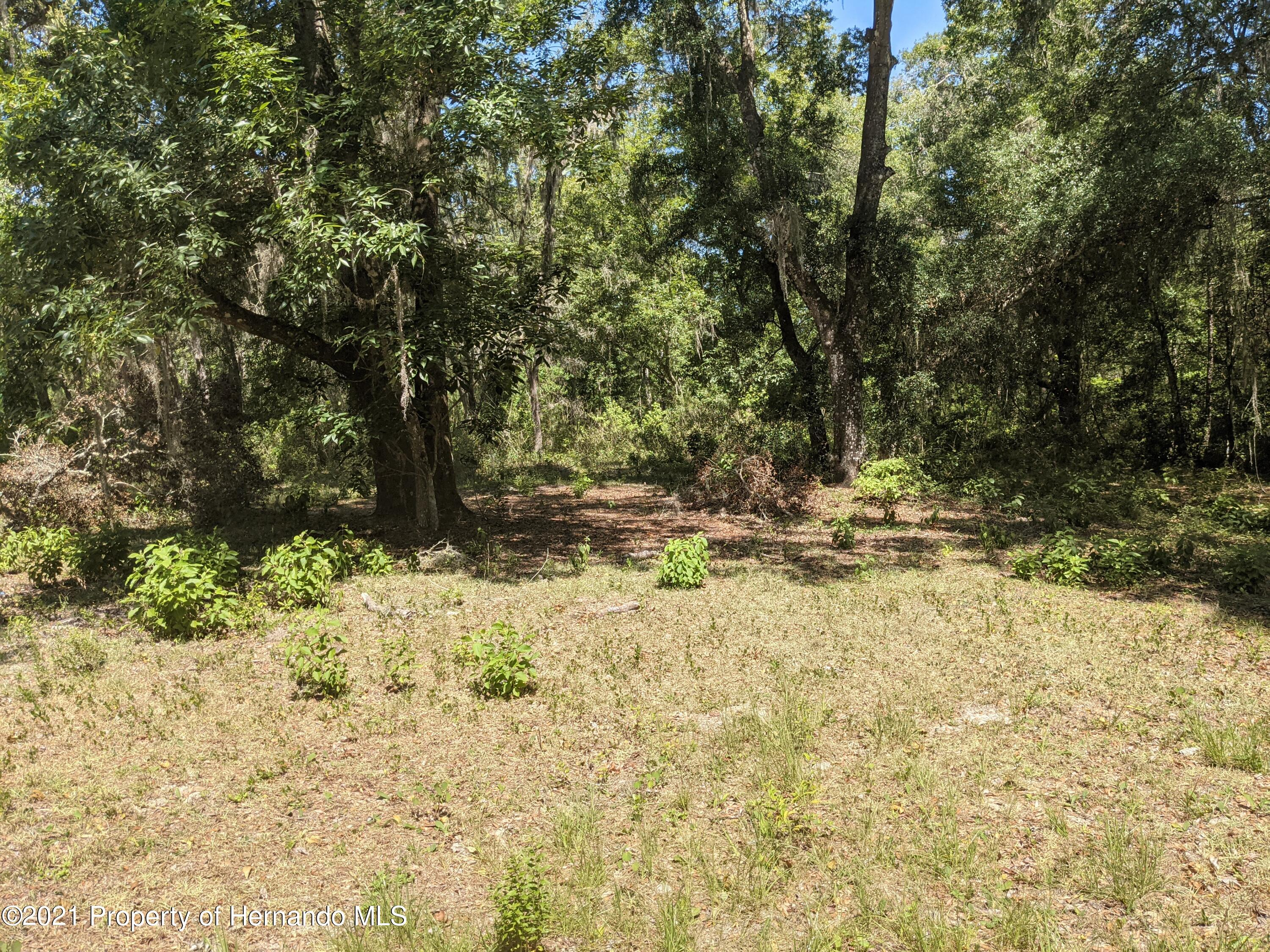 Listing photo id 4 for 000 Emerson Road