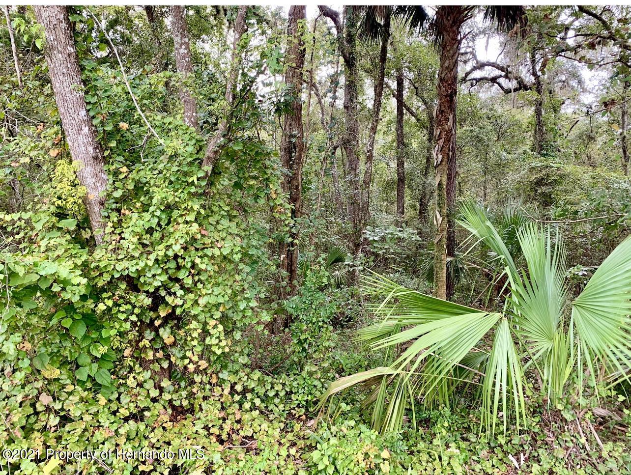 Details for 0 Florida Wren Avenue, Weeki Wachee, FL 34614