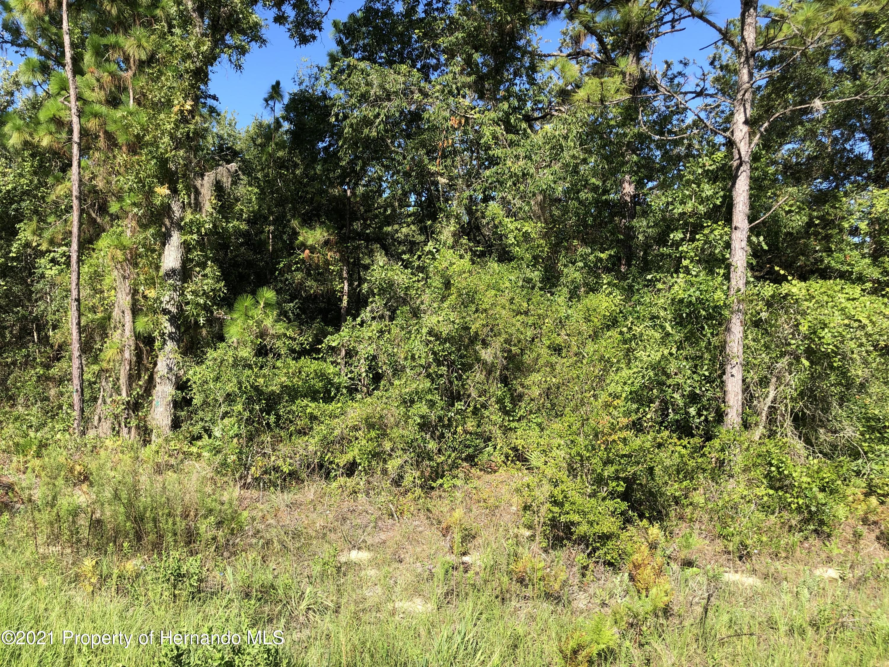 Listing photo id 2 for 0 Crider Road