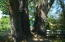 Mature trees provide ample shade
