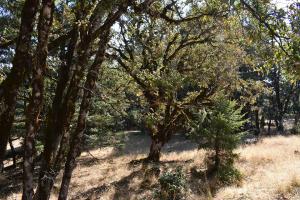 160 Ac Bluff Creek Road, Zenia, CA 95595