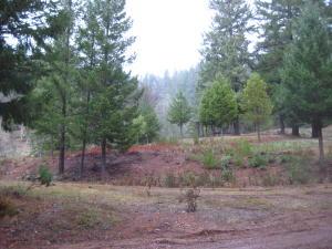 0241 Blair Creek Road, Ruth Lake, CA 95526