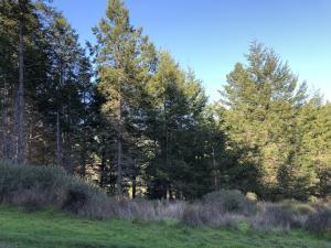 509 Humboldt Loop Road, Shelter Cove, CA 95589