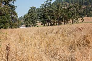0 Metropolitan Road, Fortuna, CA 95540