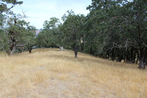 700 Dyerville Loop Road, Garberville, CA 95542
