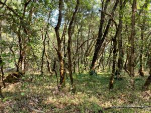 ±2.7 Acres Triple R Lane, Willow Creek, CA 95573