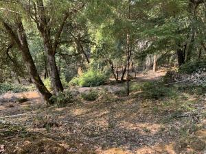 000 Twin Trees Road, Garberville, CA 95542