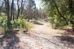 250 Bear Springs Road, Junction City, CA 96048