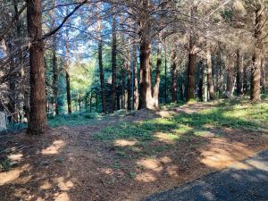 191 Olson Drive, Shelter Cove, CA 95589
