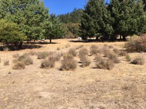 125 Old Hindley Ranch Road, Honeydew, CA 95545