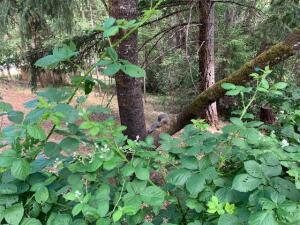 628 The Terrace, Willow Creek, CA 95573