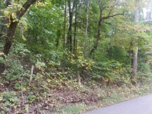 Carter Mill Drive, Knoxville, TN 37924