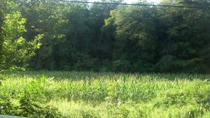 UNRESTRICTED FARM LAND WITH CORN GROWING- 3 PARCELS CREEK ON THIS TRACT- GRAINGER COUNTY