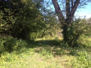 4959 Island Home Rd, Louisville, TN 37777