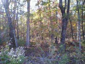 Tom Welch Rd, Crossville, TN 38571