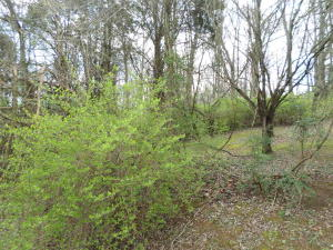 Lot 124 Skyline Ave, New Market, TN 37820