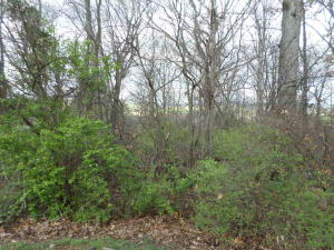 Lot 119 Magnolia Avenue Ave, New Market, TN 37820