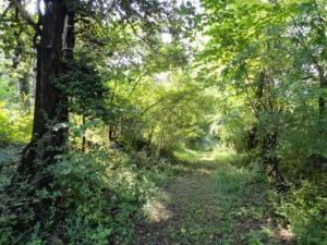 239 Longfield Church Lane, Rocky Top, TN 37769