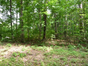 219 Lot 4 Block 2 Oostanali Way, Loudon, TN 37774