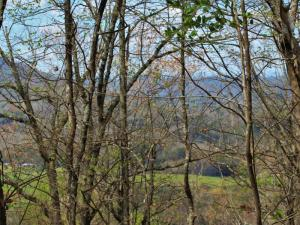1 Old Mill Rd., Tellico Plains, TN 37385