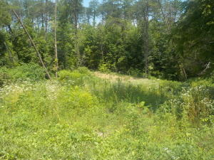 21.03 Acre Merritt Road, Washburn, TN 37888