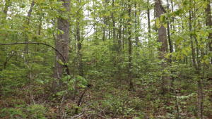 Blue Springs Rd, Speedwell, TN 37870