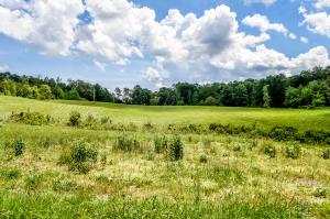 Lower Rockwood Rd (Tract 5), Rockwood, TN 37854