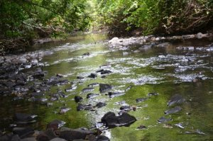 Clear Creek Lane, Clarkrange, TN 38553