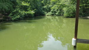 Lot 108 Treasure Tree Rd, Ten Mile, TN 37880
