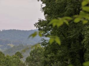 With selective thinning of the trees, you'll see mountain views like this!