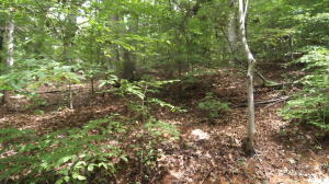 Lot 1105 Cove Lane, Baneberry, TN 37890