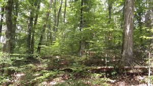 Lot 1106 Cove Lane, Baneberry, TN 37890
