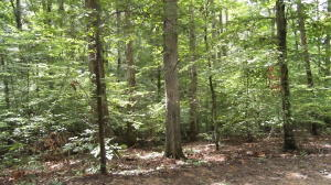 Lot 1113 Cove Lane, Baneberry, TN 37890