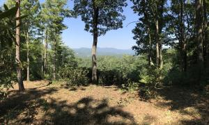 1.8 7 acres of mountain living