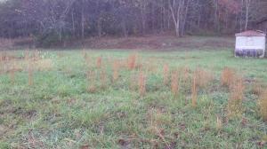 5536 Maynardville Hwy, Maynardville, TN 37807