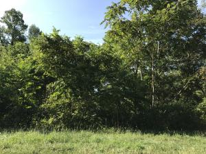 Russell Brothers Rd, Lot 516-A, Sharps Chapel, TN 37866
