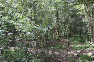 6.5 acres UNRESTRICTED wooded with good building sites