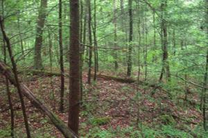429 Chetola Trail, Townsend, TN 37882
