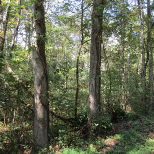 Vinsant Estates Rd, Jacksboro, TN 37757